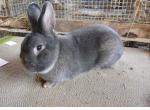 9 октября в Кирове открылась выставка кроликов.