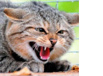 Ситуация с бешенством животных продолжает ухудшаться